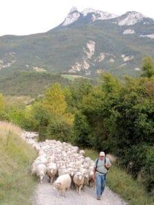 Départ troupeau à l'estive